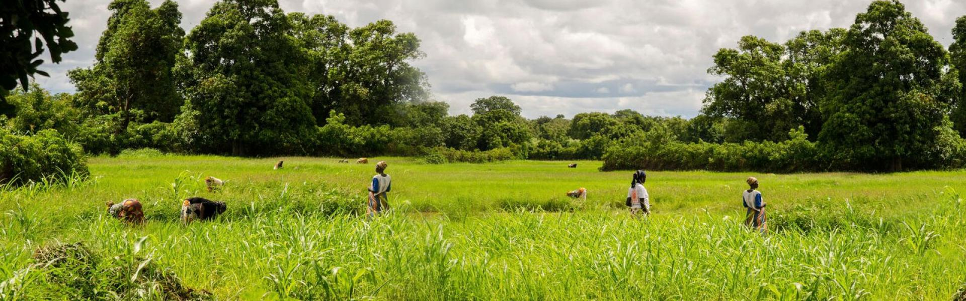 Promoting ICTs for resilient agri-food systems and profitable agribusiness