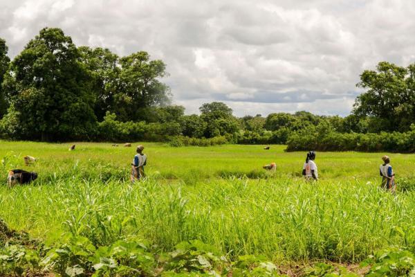 Promotion des TIC pour les systèmes agroalimentaires résilients et une agro-industrie rentable