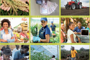 16.Africa agriculture status report 2015: Youth and agriculture in Sub-Saharan Africa